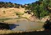 Deer Lake, Shell Ridge Open Space, June 5, 2014.
